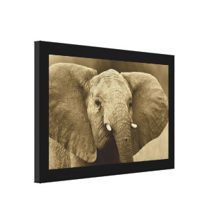 animals Africa elephant bull Stretched Canvas Print