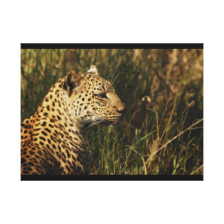 Animals Africa leopard panthera pardus Gallery Wrapped Canvas