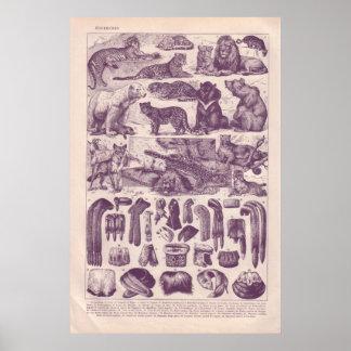 Animals and fur print