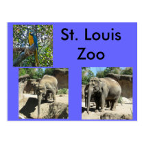 Animals at the Zoo Postcard