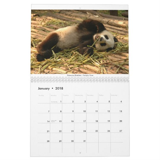Animals, Big and Small Calendar