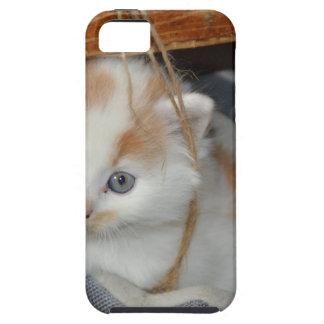 Animals Cute Kitten Kitty Pets Cats iPhone SE/5/5s Case
