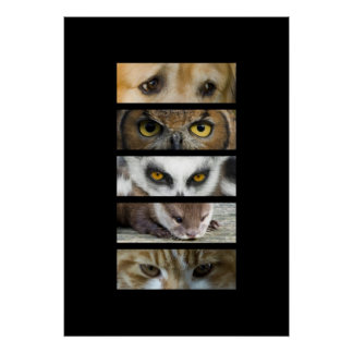 Animals Eyes Print