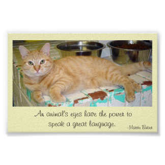Animals' eyes speak a great language poster