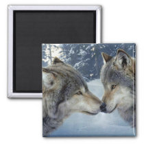 Animals kiss Magnet