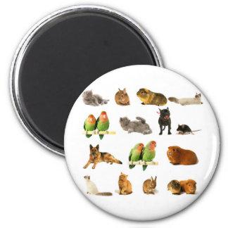 animals magnet