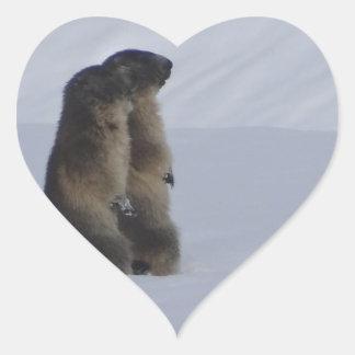 animals marmots savage