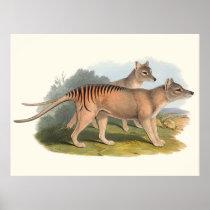 Animals Of Australia The Tasmanian Tiger Poster