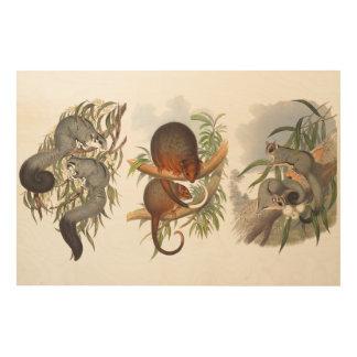 Animals Of Australia The Three Possums Wood Blocks Wood Wall Art