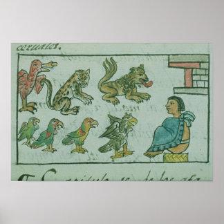 Animals of the Aztec Emperor Posters