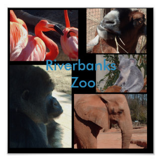 Animals of the Riverbanks Zoo and Garden Poster