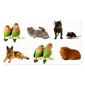 animals pack of standard business cards