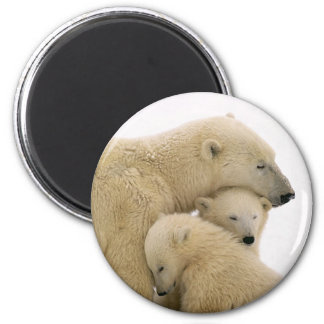 animals-polar-bear magnet