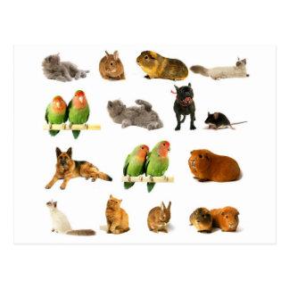 animals postcard