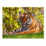 Animals postcards 37