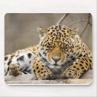 Animals Safari Jungle Office Party Shower Birthday Mousepad