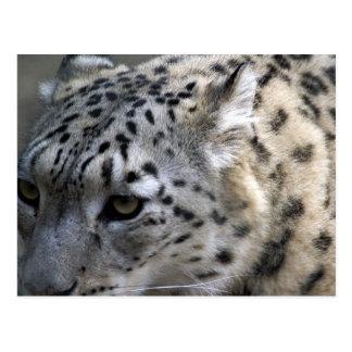 Animals Safari Jungle Office Party Shower Birthday Postcard