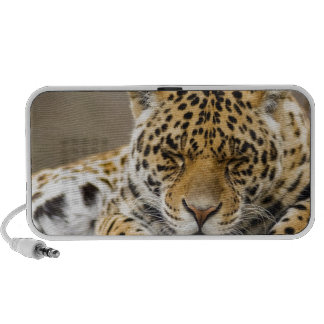 Animals Safari Jungle Office Party Shower Birthday Travelling Speakers