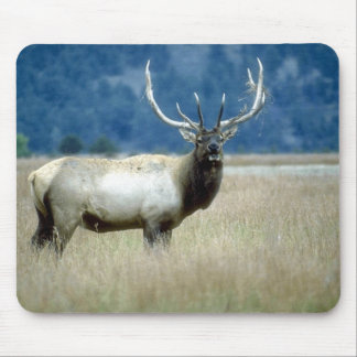 Animals Wild 1 Mouse Pads