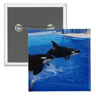 Animals Wild Dolphins Pins