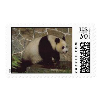 Animals Wild Panda Bear Postage