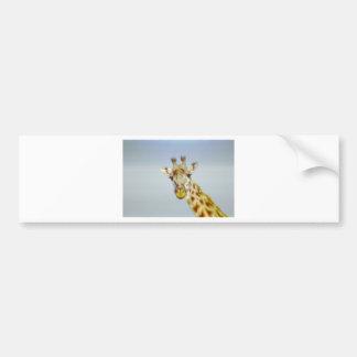 Animania Bumper Sticker