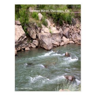 Animas River Rapids Postcard