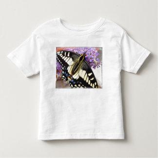 Anise swallowtail butterfly t-shirt