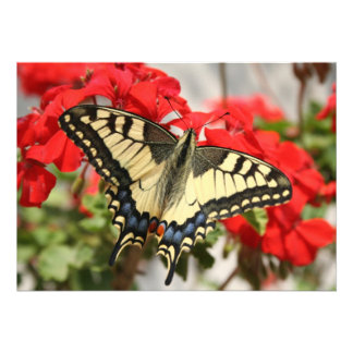 Anise Swallowtail Invitation