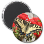 Anise Swallowtail Magnet Magnet