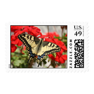 Anise Swallowtail Postage Stamp
