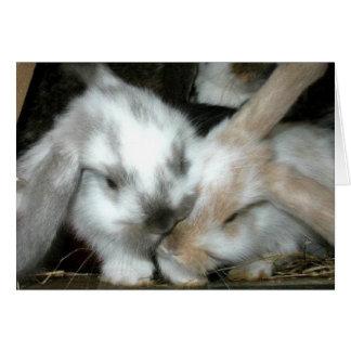 Aniversario del amor del conejito tarjeta de felicitación