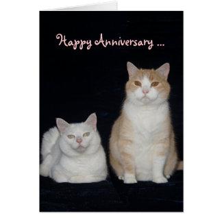 Aniversario divertido de los gatos tarjeton