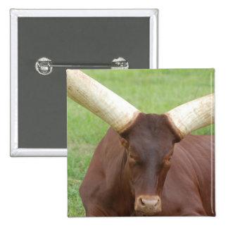Ankhole Cattle  Button