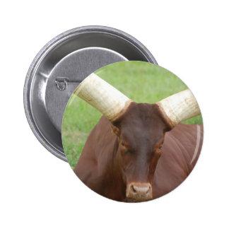 Ankhole Cattle  Pin