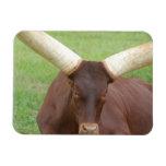 Ankhole Cattle Premium Magnet Flexible Magnets