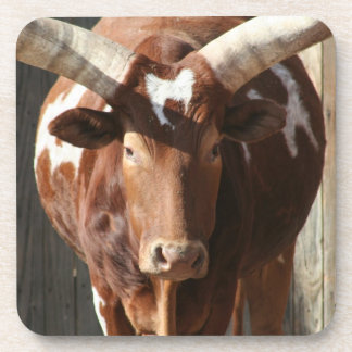 Ankole-Watusi Steer With Huge Horns Coasters