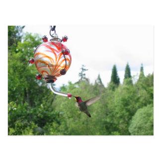 Anna s Hummingbird Post Card