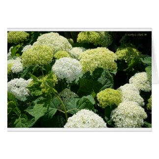 Annabelle Hydrangea Blossoms Card
