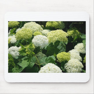 Annabelle Hydrangea Blossoms Mouse Pad