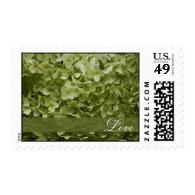 Annabelle Hydrangea Love Wedding Postage Stamps
