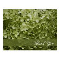 Annabelle Hydrangea Thank You Postcard