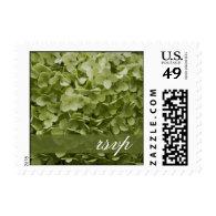 Annabelle Hydrangea Wedding RSVP Postage Stamp