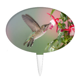 Anna's Hummingbird and Fuschia Cake Topper