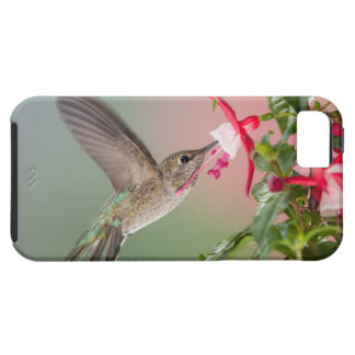Anna's Hummingbird and Fuschia iPhone SE/5/5s Case