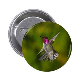 Anna's Hummingbird Button