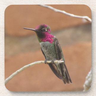 Anna's Hummingbird Beverage Coaster
