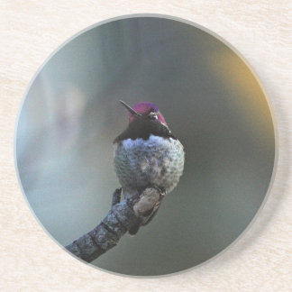 Anna's Hummingbird Drink Coaster