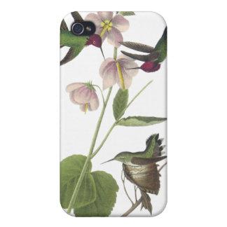 Anna's Hummingbird, James Audubon Cover For iPhone 4