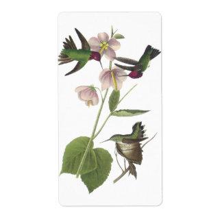 Anna's Hummingbird, James Audubon Shipping Labels